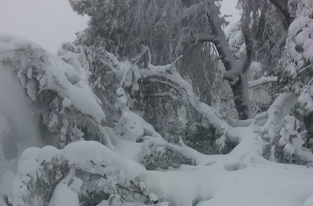 Βιβλική καταστροφή στο δάσος της Αλοννήσου