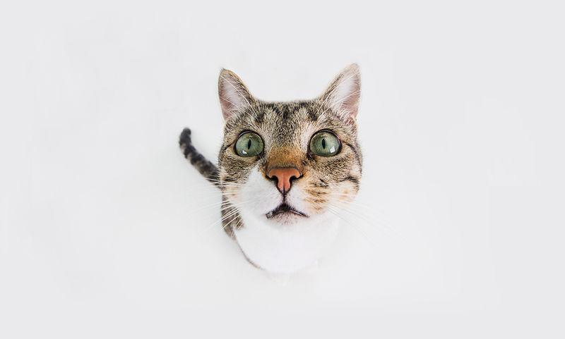 Από ποια νόσο κινδυνεύουν όσοι έχουν γάτα