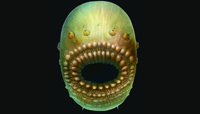 Ανακαλύφθηκε ο αρχαιότερος γνωστός πρόγονος του ανθρώπου