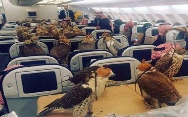 Σαουδάραβας πρίγκιπας πλήρωσε 80 αεροπορικά εισιτήρια για τα... γεράκια του