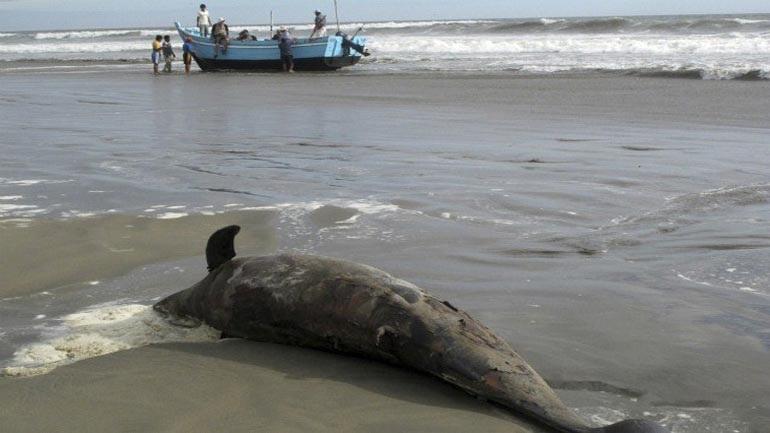 Νεκρά δελφίνια σε παραλίες της Σκιάθου