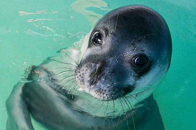 Πάρκο Αλοννήσου: Υιοθέτησαν τον μικρό Bill