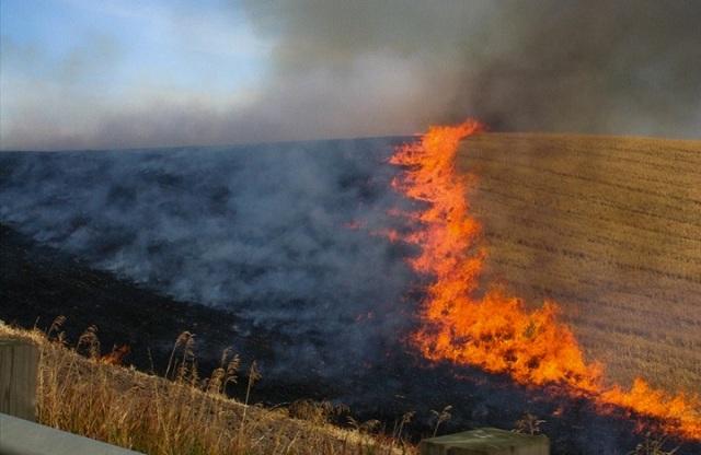 Μείωση κατά 3% της ενίσχυσης σε όσους αγρότες έκαψαν πέρυσι σιτοκαλαμιές