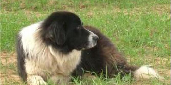 Τρίκαλα: Πρόστιμο 30.000€ σε βοσκό που σκότωσε τον σκύλο του
