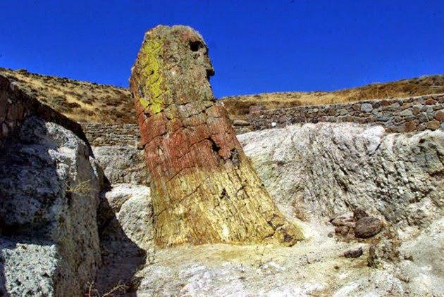 Ιστορίες 20 εκατ. χρόνων αφηγείται το απολιθωμένο δάσος της Λέσβου