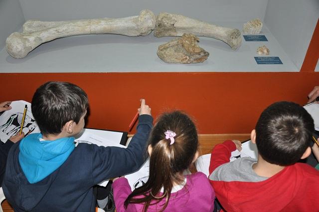 Εκπαιδευτικό Πρόγραμμα: Γίνε Μικρός Παλαιοντολόγος
