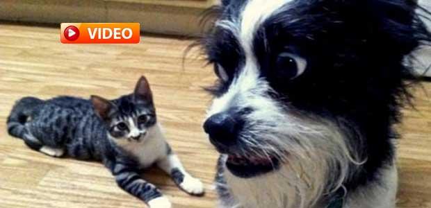 Σκύλοι και γάτες συναντιούνται για πρώτη φορά