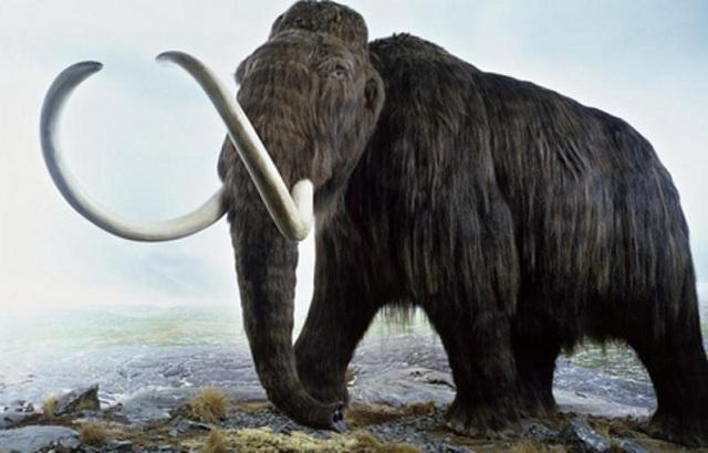 Σε δύο χρόνια η «νεκρανάσταση» του μαμούθ από Αμερικανούς γενετιστές