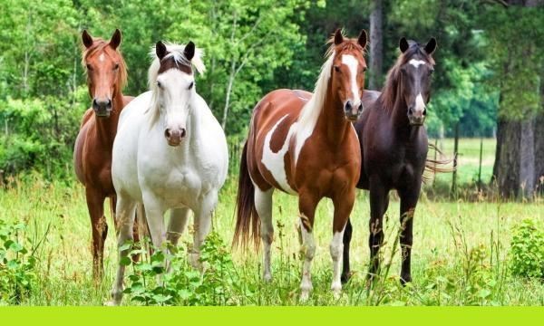 Διαμαρτυρίες σε Αγριά -Λεχώνια για «αδέσποτα» άλογα που προκαλούν ζημιές