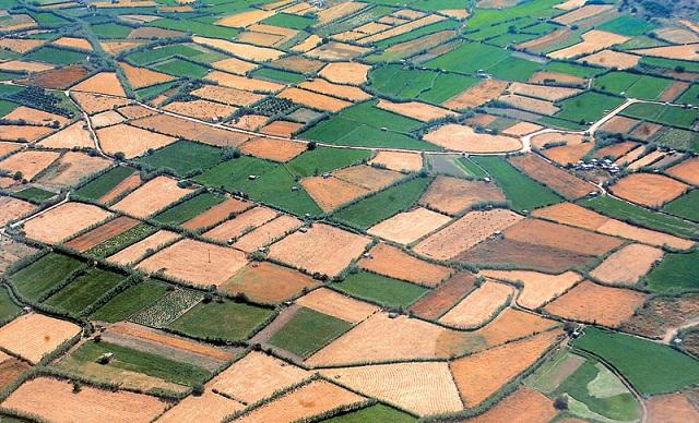 Εγκύκλιος: Πώς διασώζονται τα αγροτεμάχια