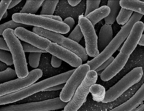 Καμπανάκι από τον ΠΟΥ για 12 οικογένειες πολυανθεκτικών βακτηρίων