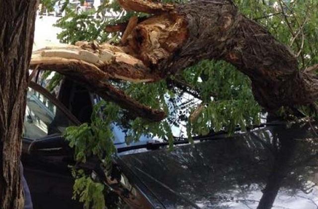 Λαχτάρησε Λαρισαίος οδηγός: Δένδρο έπεσε πάνω σε εν κινήσει αυτοκίνητο