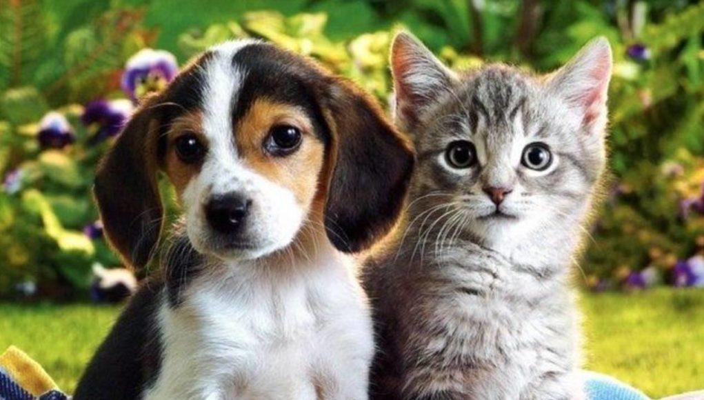 «Αδεσποτόπιτα» και «dog walk» την Κυριακή στον Βόλο