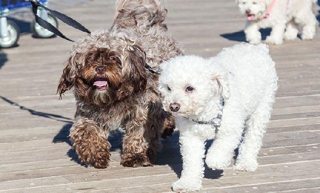 Dog walk και κοπή «αδεσποτόπιτας» στην παραλία του Βόλου