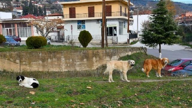 Φόβος στα Γιάννενα από τις αλλεπάλληλες επιθέσεις αδέσποτων σκύλων. Η επιστολή των φοιτητών