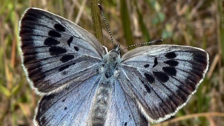 Αντιμετωπίζει ποινή φυλάκισης επειδή σκότωσε 2 πεταλούδες