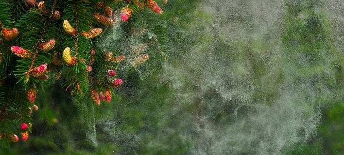 Αλλεργία της άνοιξης: Τι πρέπει να αποφεύγετε