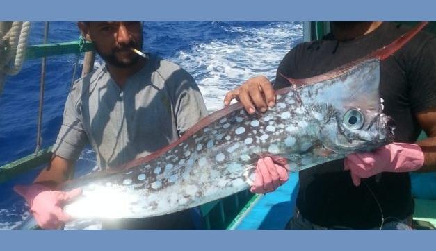 Ψαράς έπιασε σπάνιο ψάρι ανοιχτά της Σκοπέλου