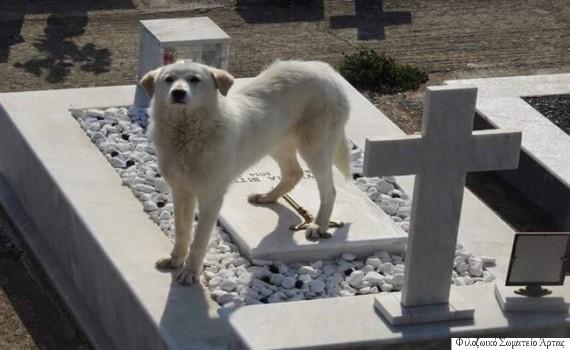 Άρτα: Σκυλίτσα περιμένει στον τάφο του αφεντικού της επί δύο μήνες