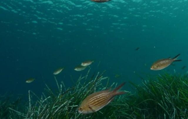 «Υπό πολιορκία» η Μεσόγειος: Χάνονται τα ψάρια της. Τι συμβαίνει με το Ιόνιο