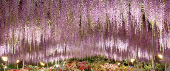 Η Ιαπωνία πρέπει να είναι η πιο όμορφη χώρα του κόσμου αυτή την στιγμή