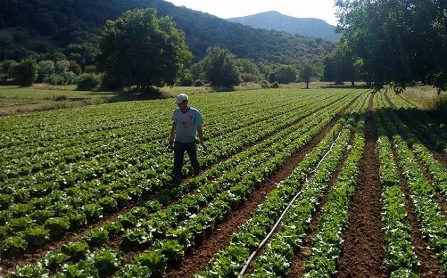 Ηλικιωμένος έφυγε για αγροτικές εργασίες και δεν επέστρεψε…