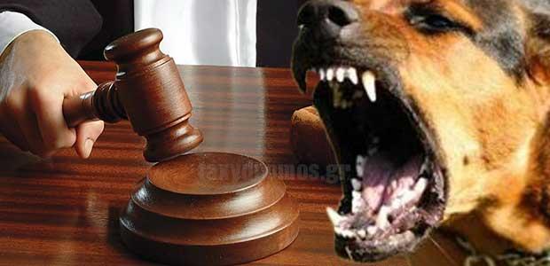 14μήνες φυλάκιση σε ιδιοκτήτη σκύλου - Γερμανικός ποιμενικός επιτέθηκε σε 5χρονο