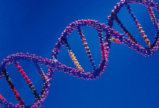 Περίπου 6.500 γονίδια «εκδηλώνονται» διαφορετικά σε άνδρες και γυναίκες