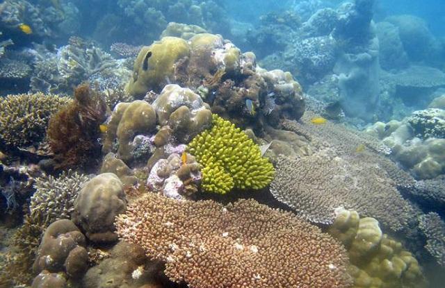 Σε κίνδυνο τα κοράλλια της Μεσογείου