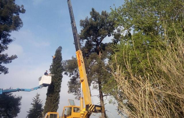 Κοπή επικίνδυνου δέντρου στην Ιωλκού