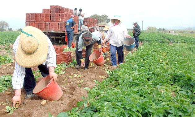 Να επιστρέψουν πίσω το ΦΠΑ που εισέπραξαν καλούνται οι αγρότες