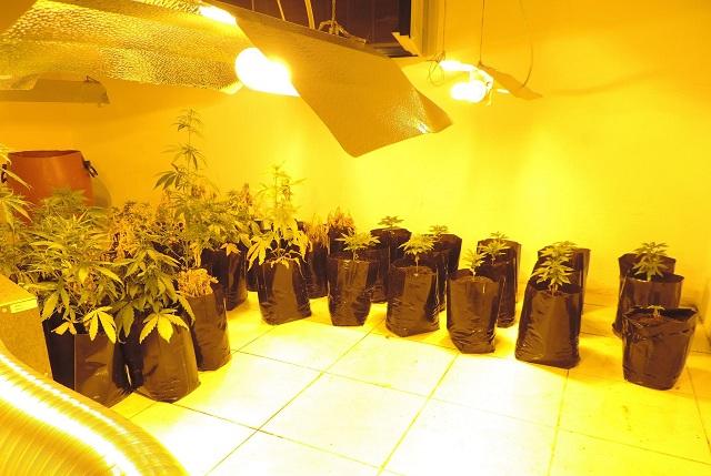 Οργανωμένη υδροπονική καλλιέργεια κάνναβης σε σπίτι στην Αγιά