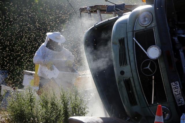 «Πλημμύρισε» μέλισσες η επαρχιακή οδός Ναυπλίου-Μυκηνών μετά από ανατροπή φορτηγού με κυψέλες [εικόνες]
