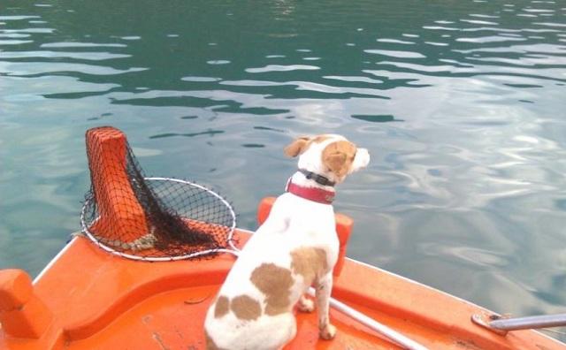 Αίσιο τέλος για τη «Ρούλα», τη σκυλίτσα-μασκότ