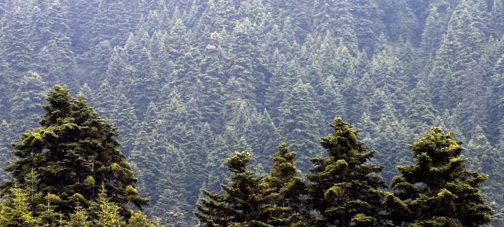 Δασικοί χάρτες: Η καταγραφή είναι η μόνη λύση για την προστασία των δασών
