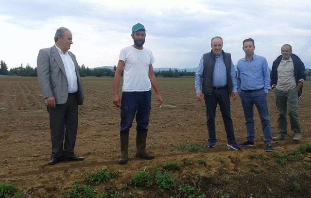 Ζημιές έως και 100% σε καλλιέργειες στον Αλμυρό από τις ισχυρές βροχοπτώσεις