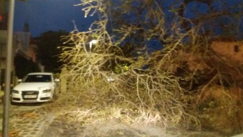 Ξεριζώθηκαν δέντρα από την κακοκαιρία - Χαλάζι στη Χαλκηδόνα