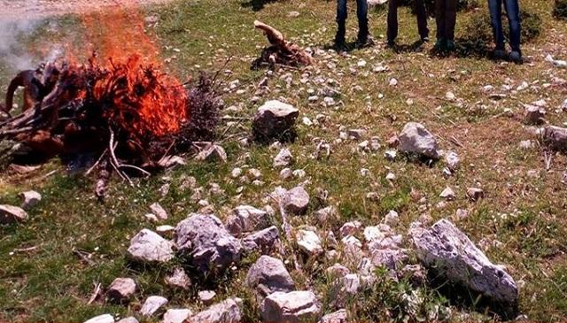 Οικολογικό έγκλημα στα Ακαρνανικά. Εξοντώνουν όρνια σπάνιου είδους και αγελάδες