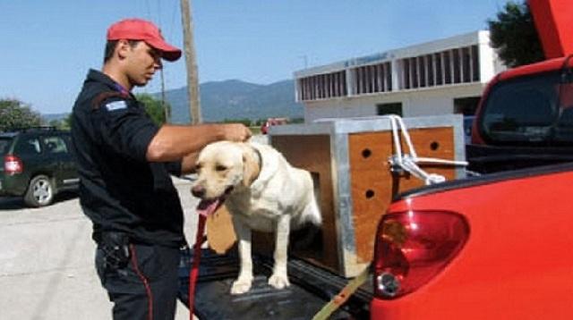 Προσπάθεια απεγκλωβισμού σκύλου από την 8η ΕΜΑΚ