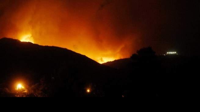 Πάρνηθα: 10 χρονιά μετά την καταστροφική πυρκαγιά. Το βουνό έχει και πάλι ζωή [photos-video]