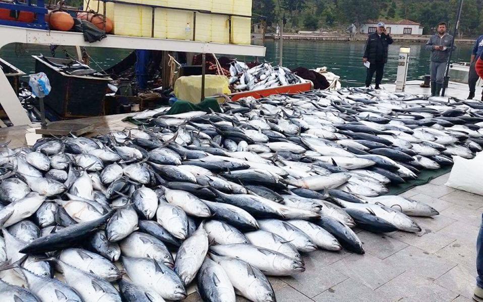 Το 10% των ψαριών που αλιεύονται πετιούνται πίσω στους ωκεανούς