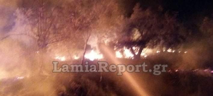 Διερχόμενο τρένο προκάλεσε φωτιά σε περιοχή της Λαμίας [εικόνες]