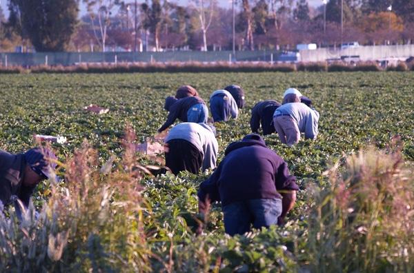 10.562 νέες θέσεις εργασίας στη γεωργία