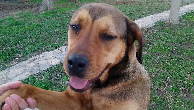 Θανάτωσαν με φόλα τη σκυλίτσα «μασκότ» της Ν. Αγχιάλου