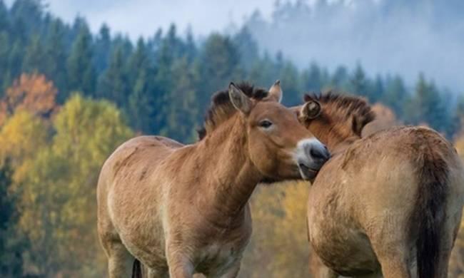 66 συλλήψεις για εμπόριο κρέατος αλόγου στην Ισπανία