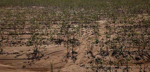 Πλημμύρισαν 5.000 στρέμματα στον Δήμο Ρήγα Φεραίου