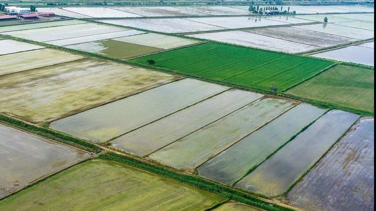 Οκτώ υπουργοί ζητούν προστασία του ευρωπαϊκού ρυζιού