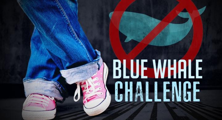 Τρία χρόνια φυλάκιση για τον διαχειριστή της «Μπλε Φάλαινας»
