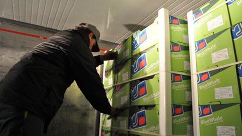 Δέσμευση φορτίου 9 τόνων φρούτων στον Πειραιά