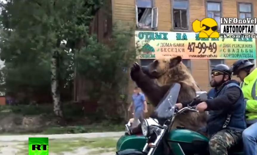 Βόλτα με μηχανή και συνεπιβάτη αρκούδα